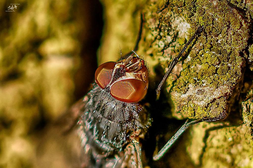 Insekten. The view of the detail, Eine Fliege die sich im goldwarmen Sonnenlicht aufwärmt, Wagen wir einen Blicknäher, Sda, Danny Koerber, Sehnsucht der Augen, Makro, Detail