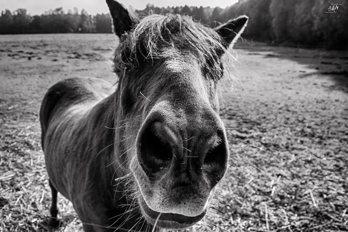Neuanfang, In full gallop or not, Auf ein Neues, Danny Koerber, Sehnsucht der Augen, Riere, Schwarz Weiß. Haustiere und Pferde