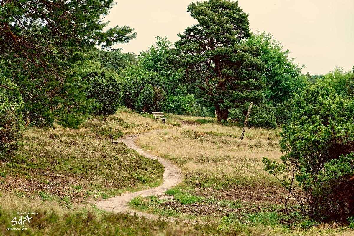 Ein kleiner Besuch in der Heide, Lüneburger Heide fotografiert von Danny Koerber für Sehnsucht der Augen.