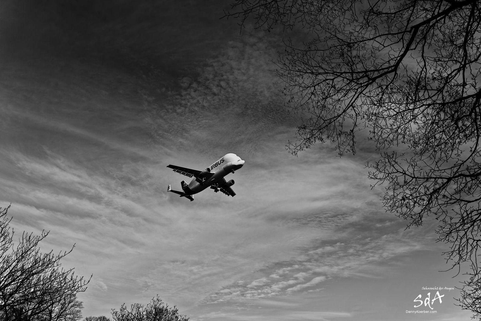 Beluga 5 in Hamburg bei der Landung. Flugzeuge fotografiert von Danny Koerber in Schwarz Weiß.