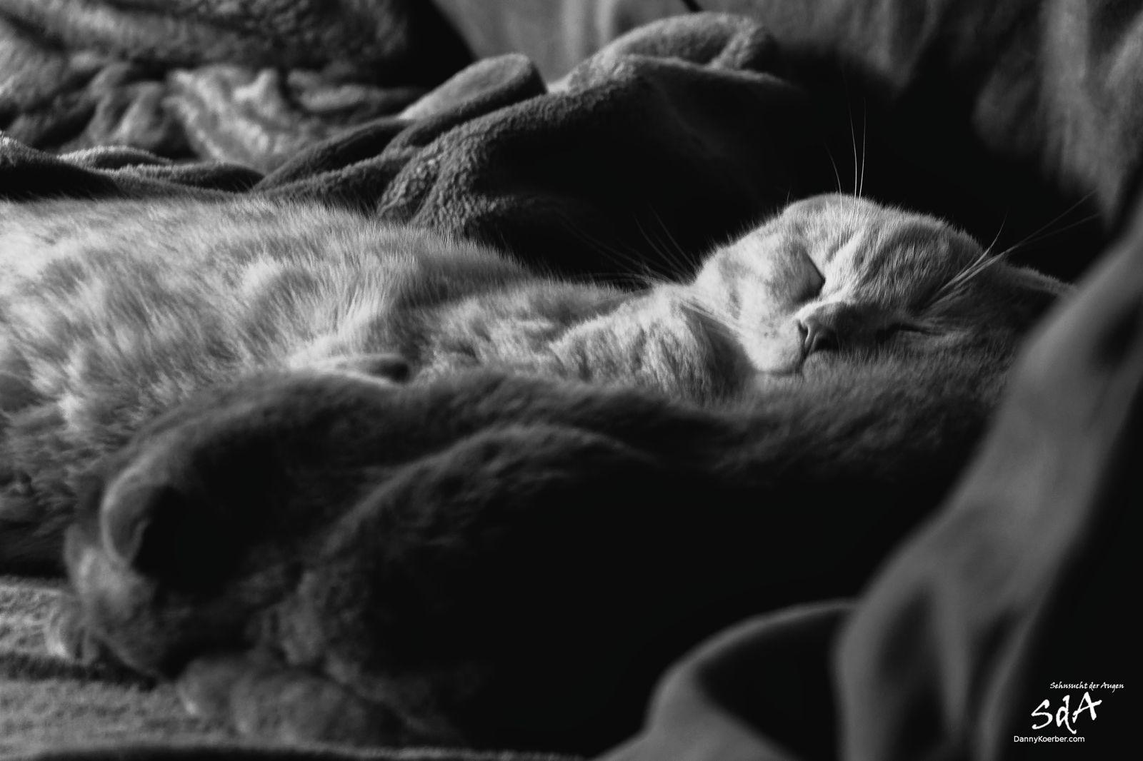 Der Tag der Besinnung und Stille. Einfach mal Nachdenken und andere schlafen lassen.