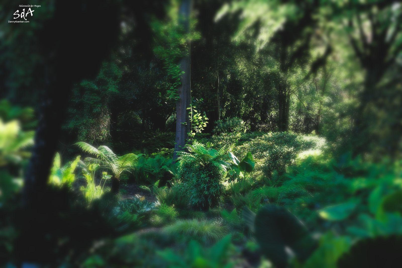 Ein ruhiger Tag. Urwald in Hamburg, fotografiert im botanischen Garten Hamburg von Danny Koerber.