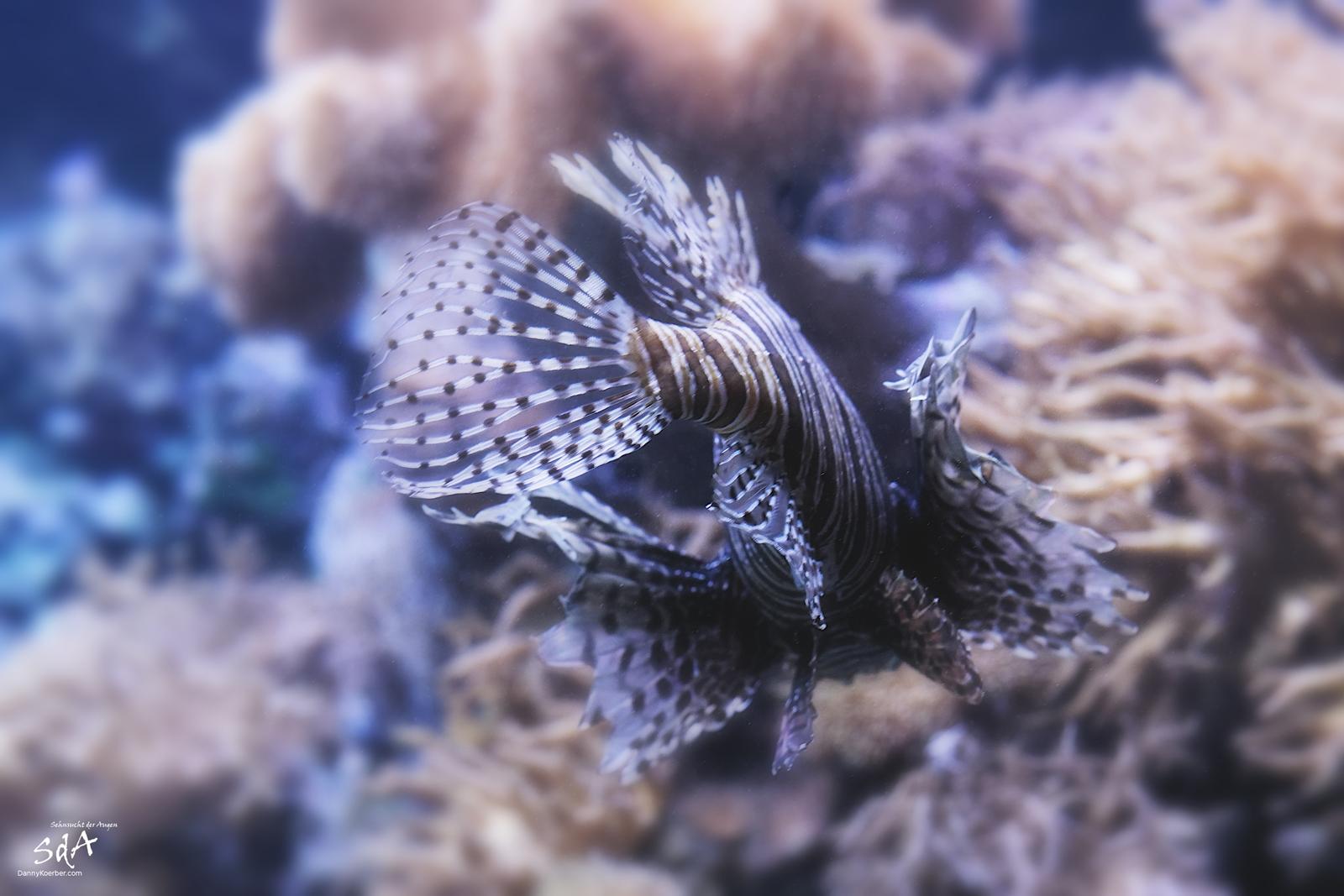 Wassertiere