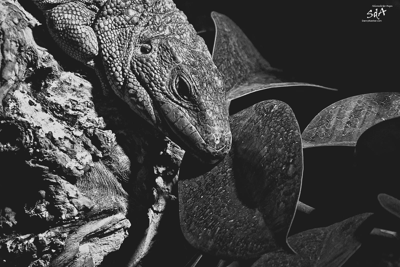 Tiere und Reptilien