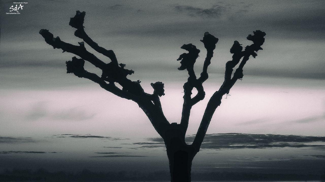 Krueppeleiche am Elbstrand, fotografiert von Danny Koerber für Sehnsucht der Augen.