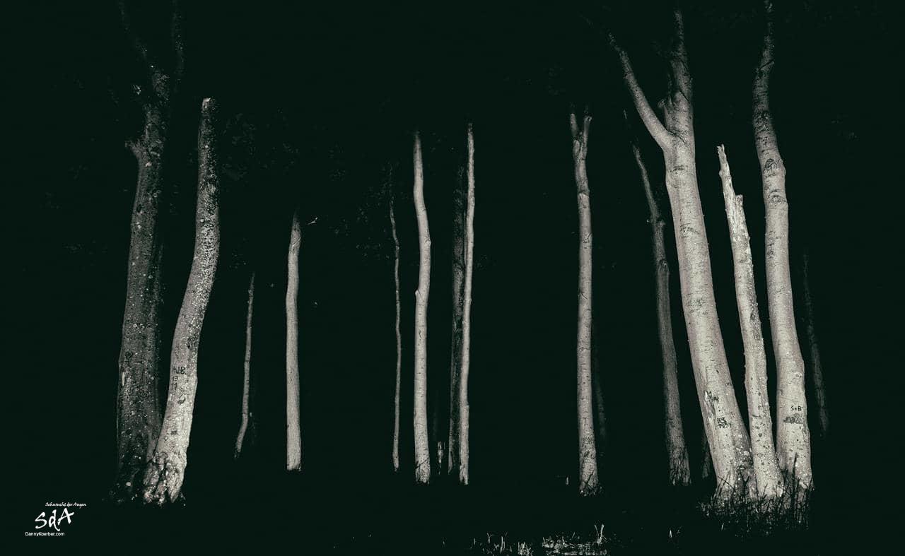 Gespensterwald 2, fotografiert von Danny Koerber für Sehnsucht der Augen in schwarz weiß