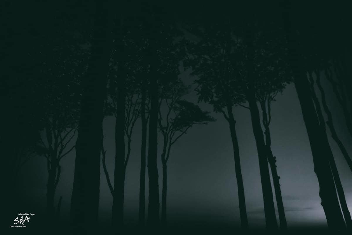 Gespensterwald 3, fotografiert von Danny Koerber für Sehnsucht der Augen in schwarz weiß