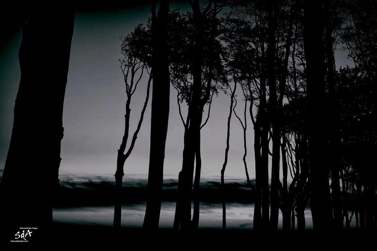 Dunkle Waelder im Gespensterwald 4, fotografiert von Danny Koerber für Sehnsucht der Augen in schwarz weiß