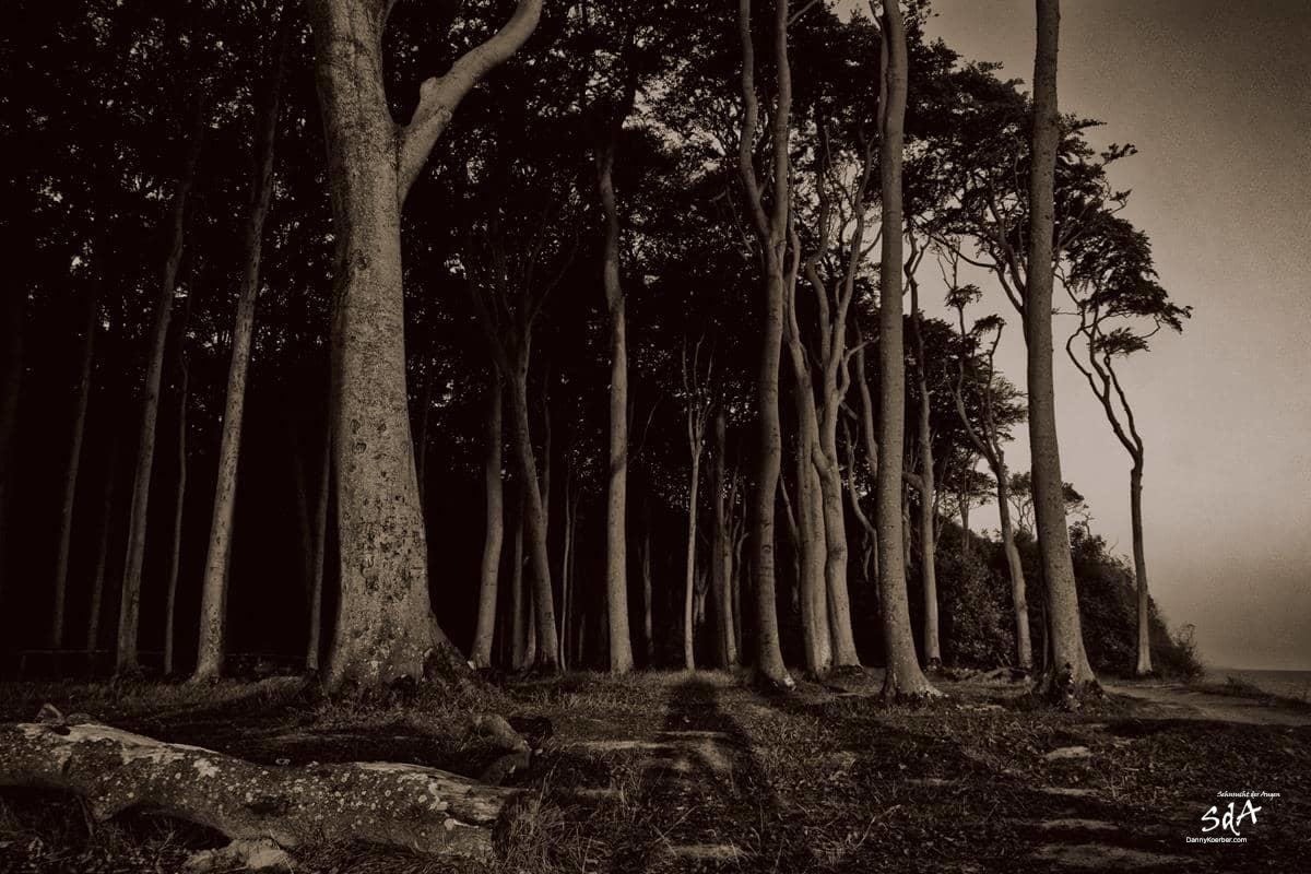 Gespensterwald 5, fotografiert von Danny Koerber für Sehnsucht der Augen in schwarz weiß