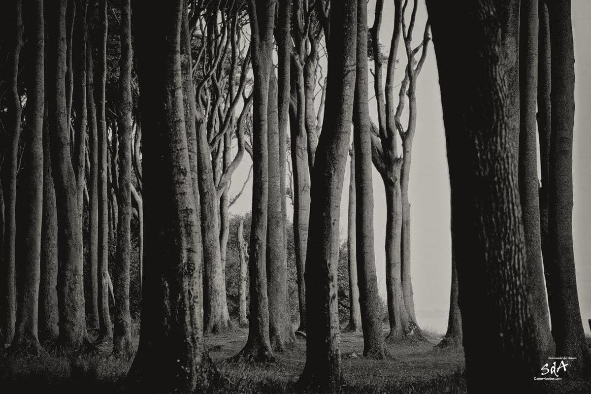 Gespensterwald, fotografiert von Danny Koerber für Sehnsucht der Augen in schwarz weiß