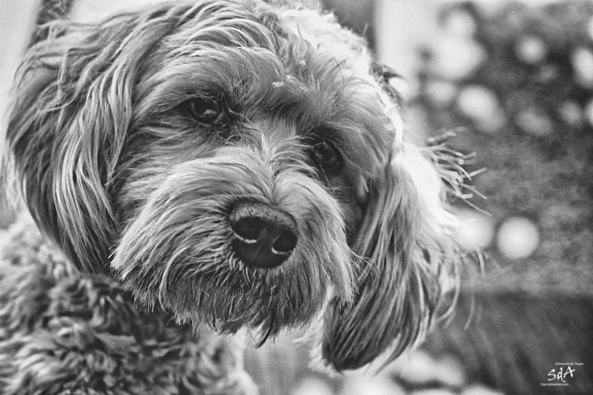 Schwarzweißfotografie eines Hundes, von Danny Koerber für Sehnsucht der Augen.