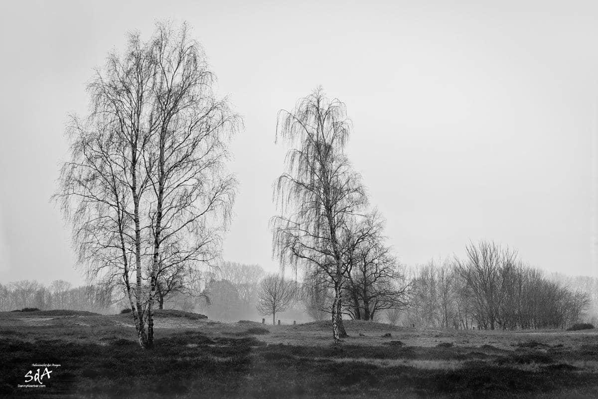 Gespensterwald 1, fotografiert von Danny Koerber für Sehnsucht der Augen in schwarz weiß